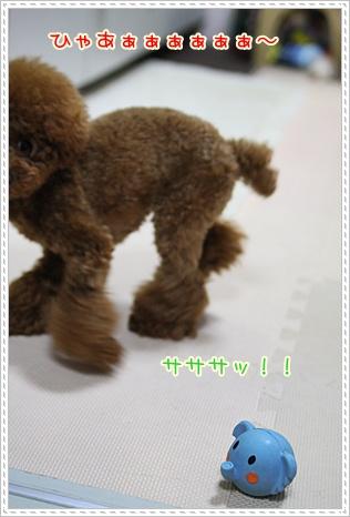 8_20090518194640.jpg