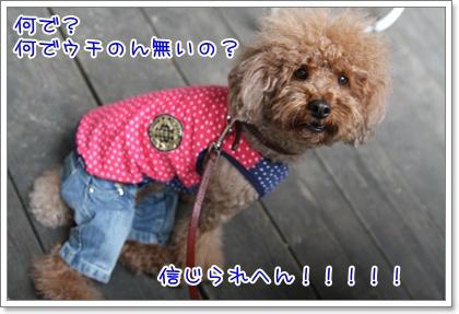8_20090601203741.jpg