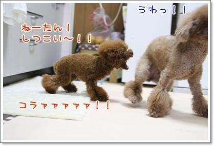 9_20090527204144.jpg