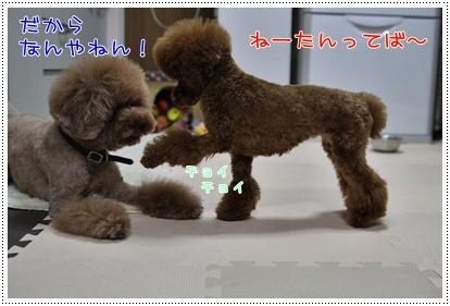 b_20090323185607.jpg