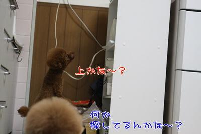 d_20090328001705.jpg