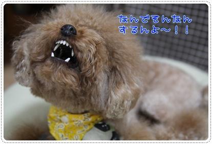 f_20090303201719.jpg