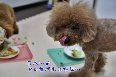 f_20090318192006.jpg