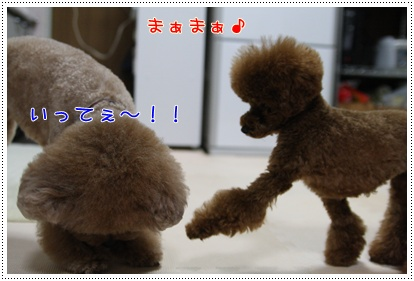 f_20090323185727.jpg