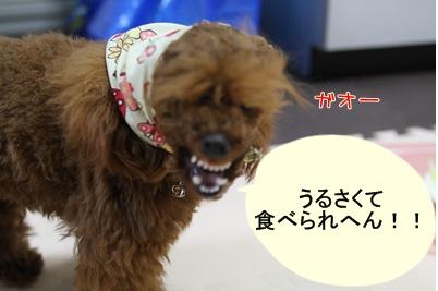 j_20090318192219.jpg