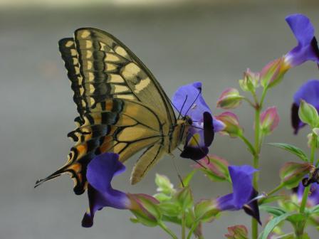 2008.10.11蝶と花