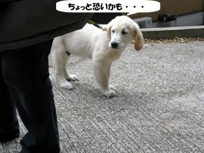 yamato-2.jpg
