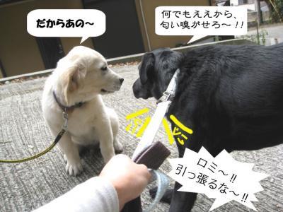 yamato-4.jpg