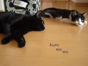 kuromomo