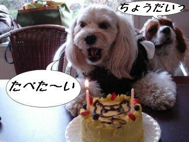 あず&ぷりん&ケーキ