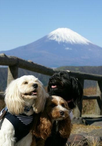 富士山と♪