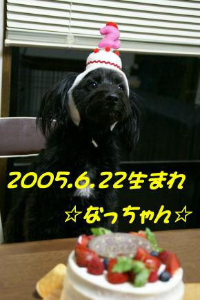 DSC08535.jpg