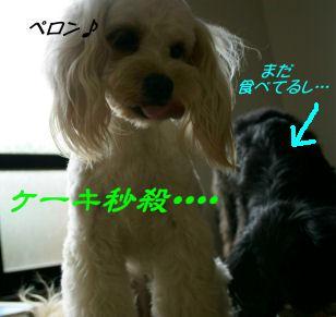 DSC08609.jpg