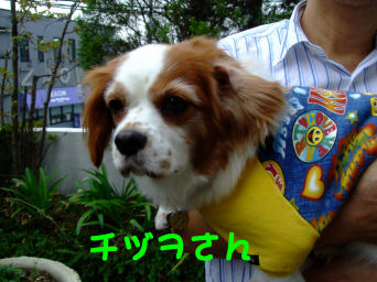 チヅヲさん