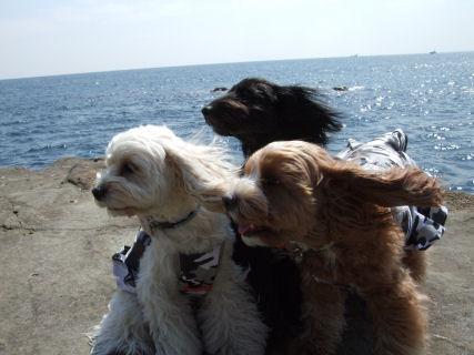 海辺 3姉妹