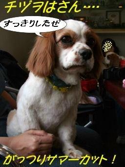 サマーカッツチヅヲ