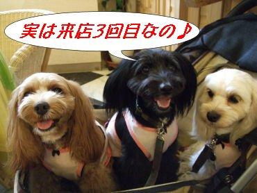 3姉妹カフェ3回目♪