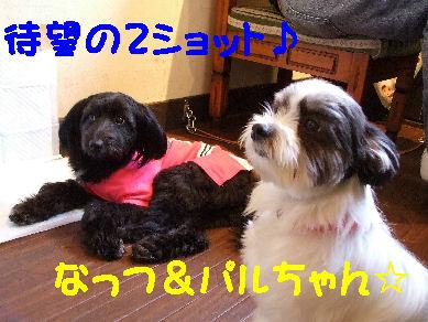 DSCF3827.jpg