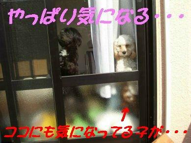 DSCF5611.jpg