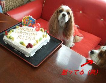 ケーキ&リイナさん
