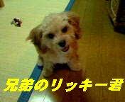 リッキー1
