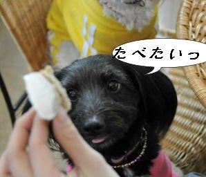 たべたい!