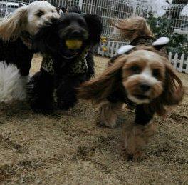 たのし~く遊ぶ3姉妹