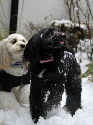雪&あずなつ