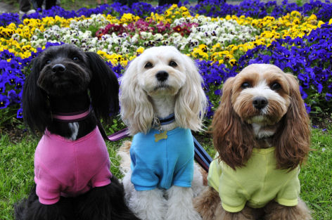 お花と3姉妹