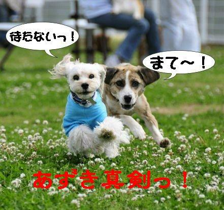 あずき逃げる!!
