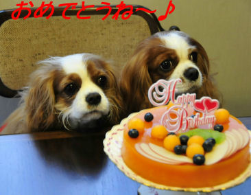 ララセラちゃんとケーキ