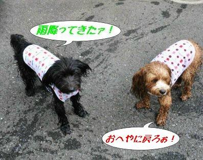 雨降ってきちゃった~