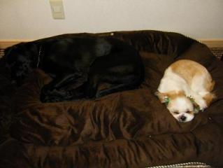 このベッド持って行ってもいい?