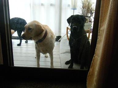入れてもらえませんか・・・