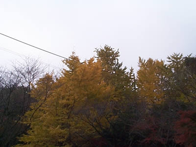 20081123_03.jpg