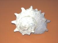20060120105207.jpg