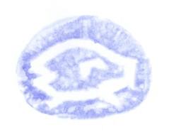 20070103212957.jpg