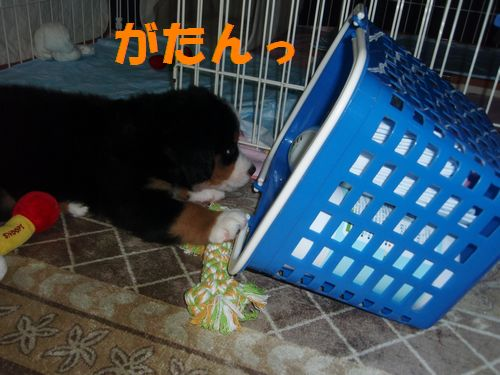2008_0918_2300226-P9181135.jpg