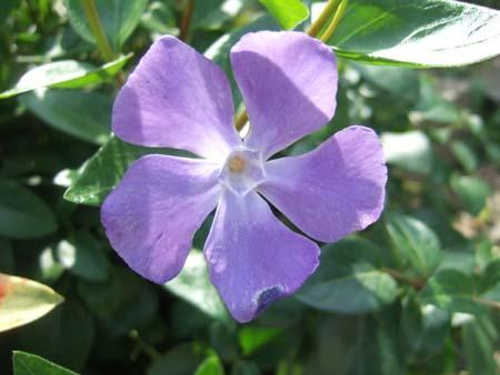 実家に咲く花 その5