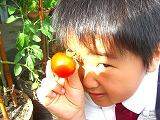 トマト収穫完了♪