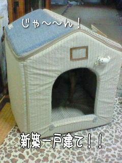 080320-1t.jpg