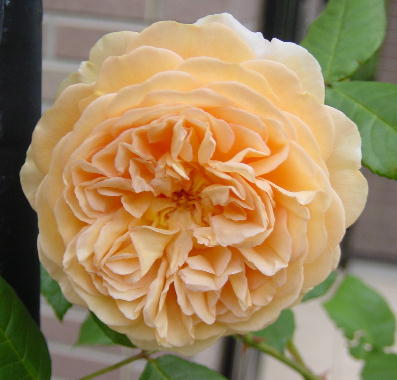 Crown Princess Margareta9517-1