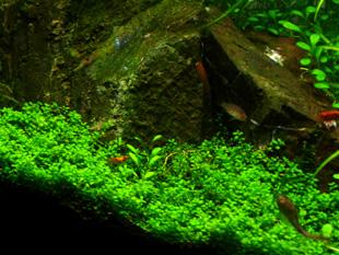 ガーデンミニM魚達