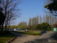 庄内緑地公園・並木道
