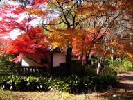 東2008年東山植物園の紅葉#2