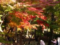 2008年東山植物園の紅葉#3