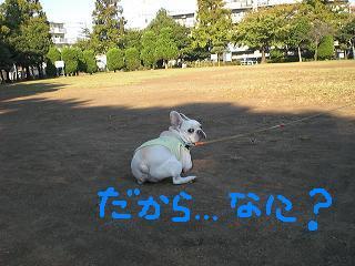 CIMG4253_convert_20081030203337.jpg