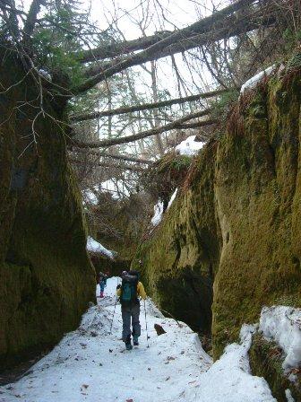 苔のトンネル