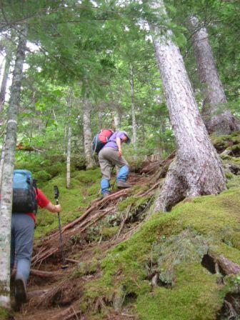 苔むした登山道を登る