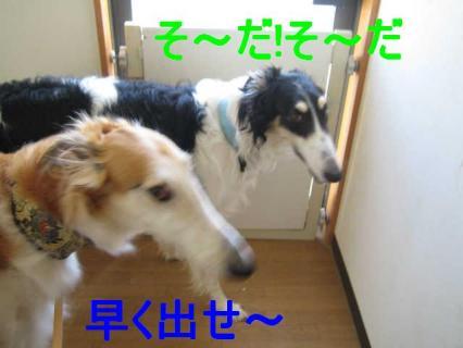 IMG_2396.jpg